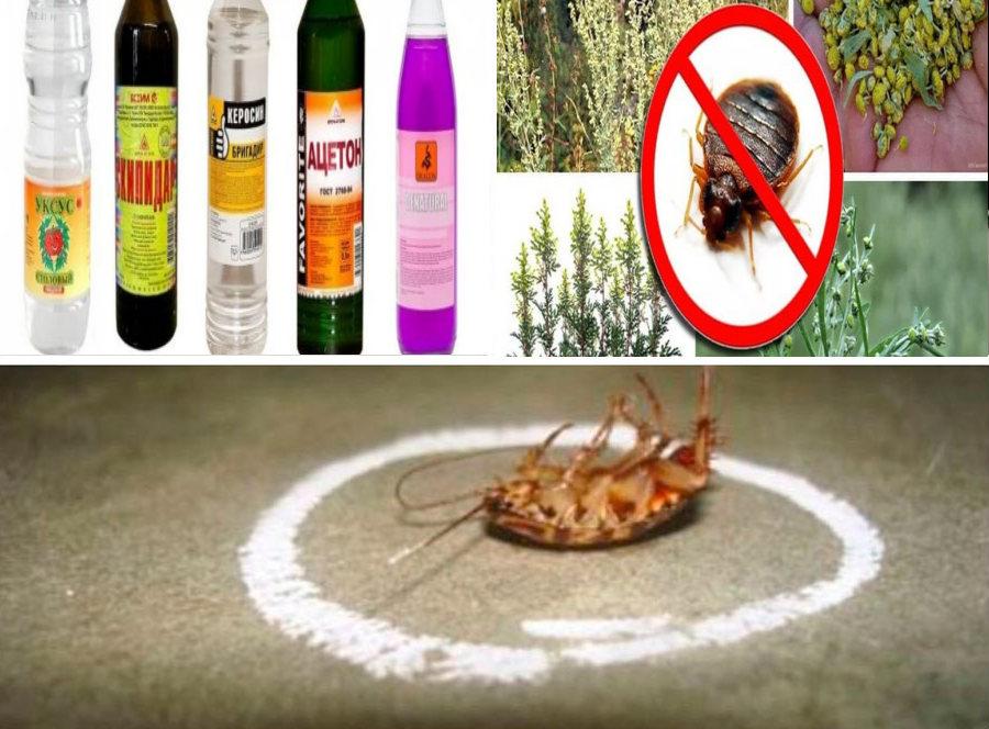 Чем травить насекомых в домашних условиях?