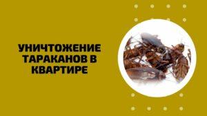 Уничтожение тараканов в квартире Пермь цены