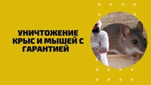Уничтожение крыс и мышей с гарантией Пермь (дератизация)