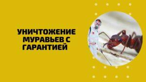 Уничтожение муравьев с гарантией Пермь Цены